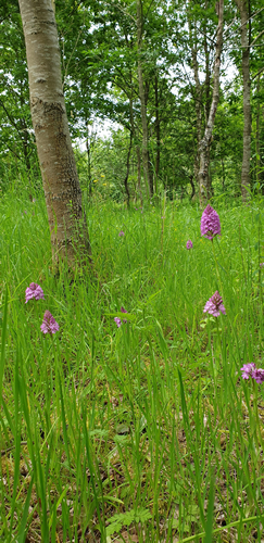 Pilates and wild orchirds